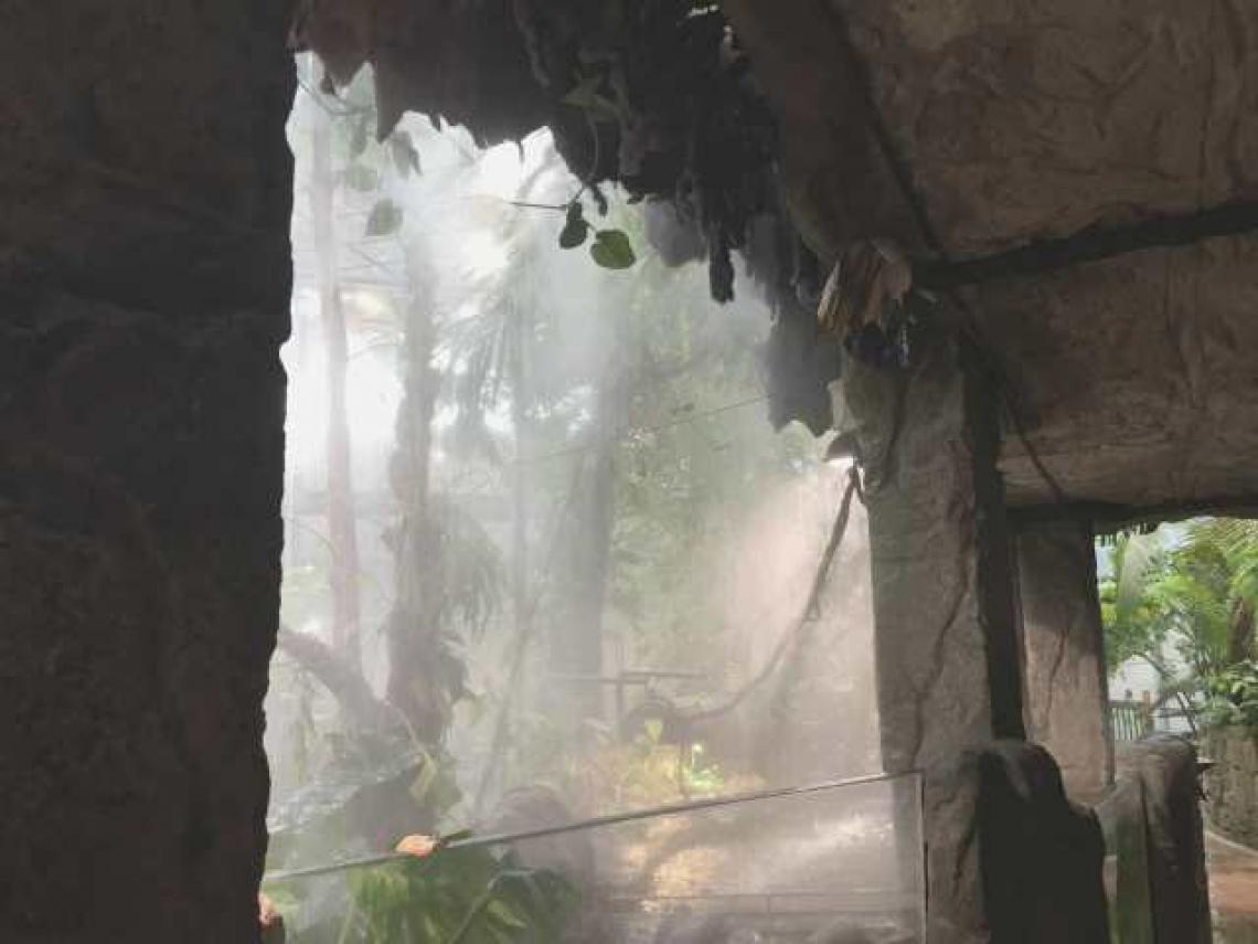 """Regen und Dunst für den Regenwald ?   Das schwedische Technikmuseum """"Universeum"""" in Göteborg eröffnete seine neu gestaltete Regenwaldausstellung."""