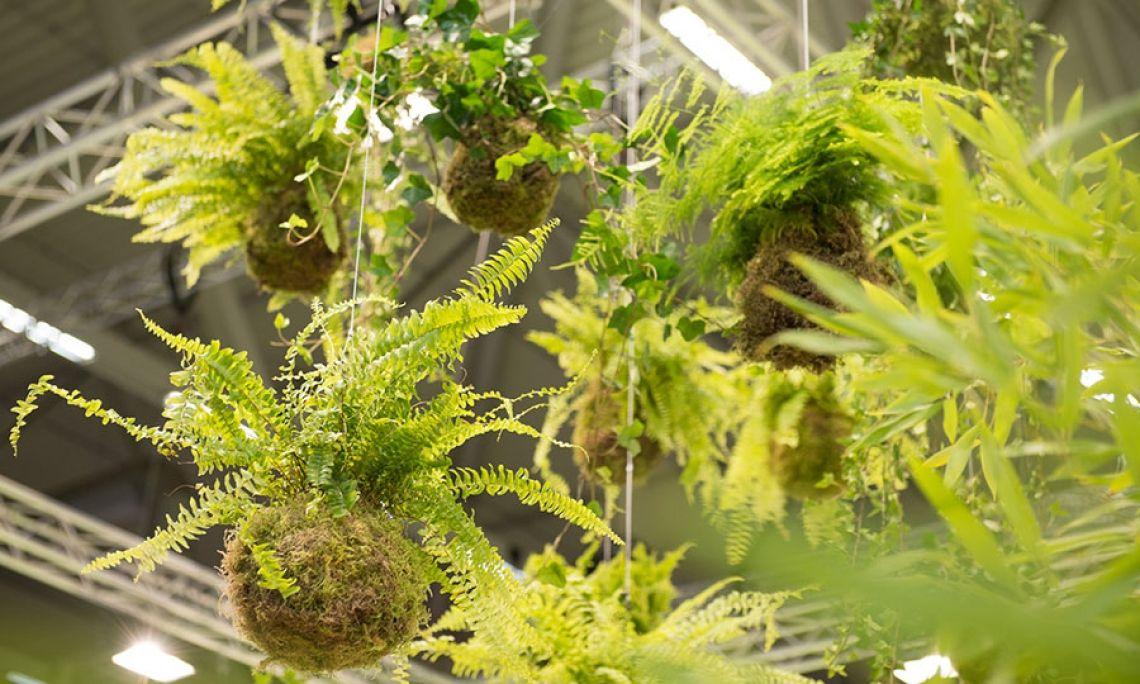 Dekoration Raumgestaltung: hängende Gärten