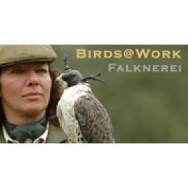 Birds@Work Falknerei  Greifvögel Workshops und Shows