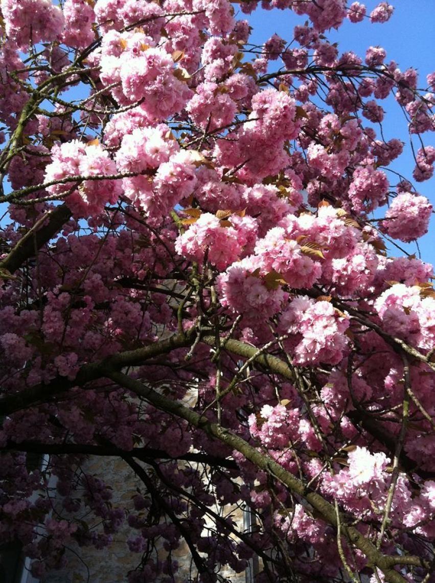Frühling am Pegasus An der Bergstraße erleben wir immer die Baumblüte zuerst und so sieht das aus.....